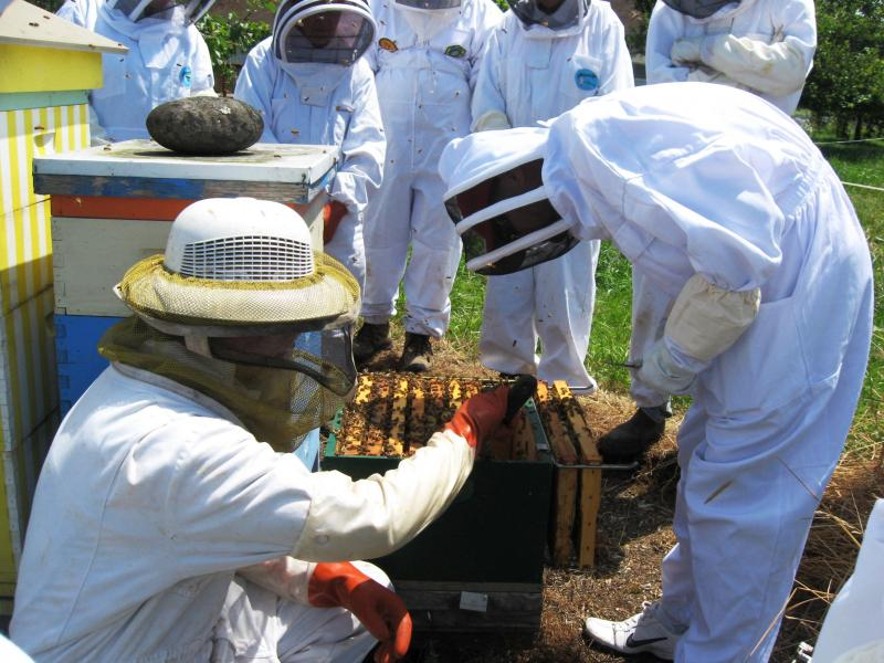 LCBA President Norm Switzler guides workshop participant in hive inspection