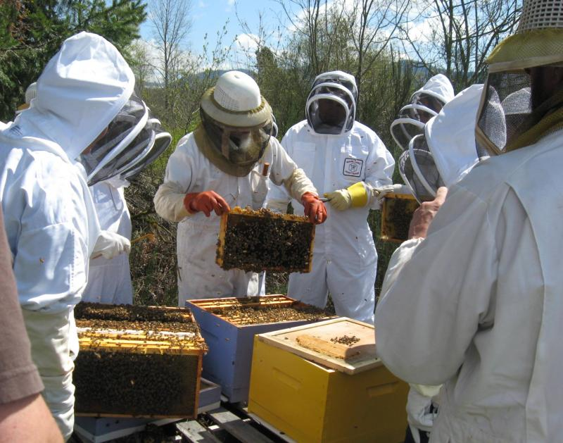 LCBA President Norm Switzler leads hive inspection workshop in Randle, April 201