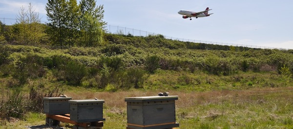 First hives placed at SEATAC