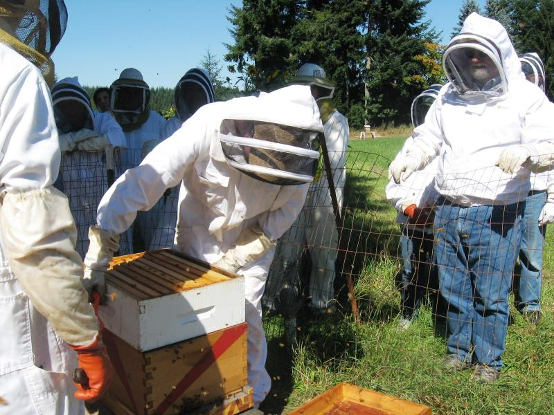 Putting hive back together after inspection