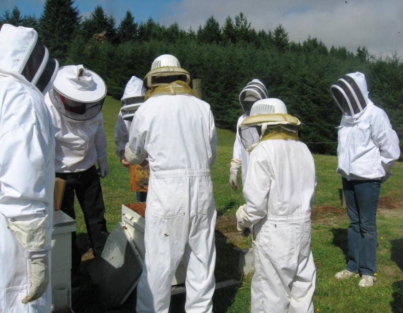 LCBA hive inspection workshop