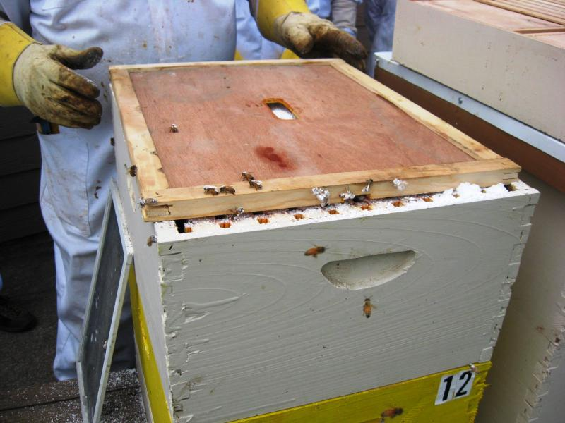 Carefully sliding inner cover into place without crushing bees.