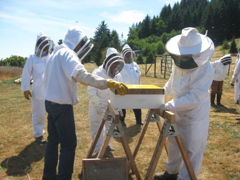 LCBA August 9 honey supers removal workshop