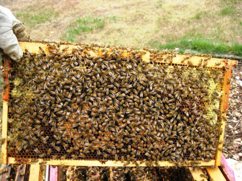 brood and honey arch