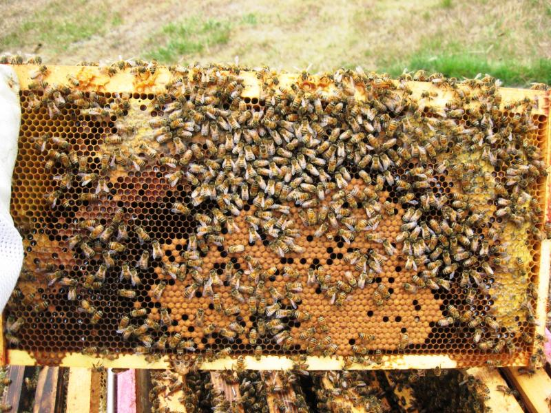 honey pollen brood arches