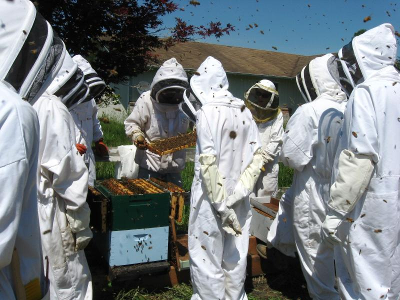 LCBA May 30 hive inspection workshop