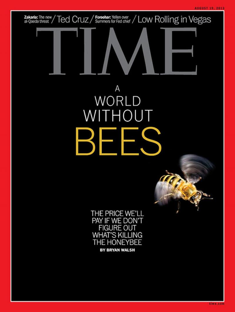 A World Without Honeybees:  TIME