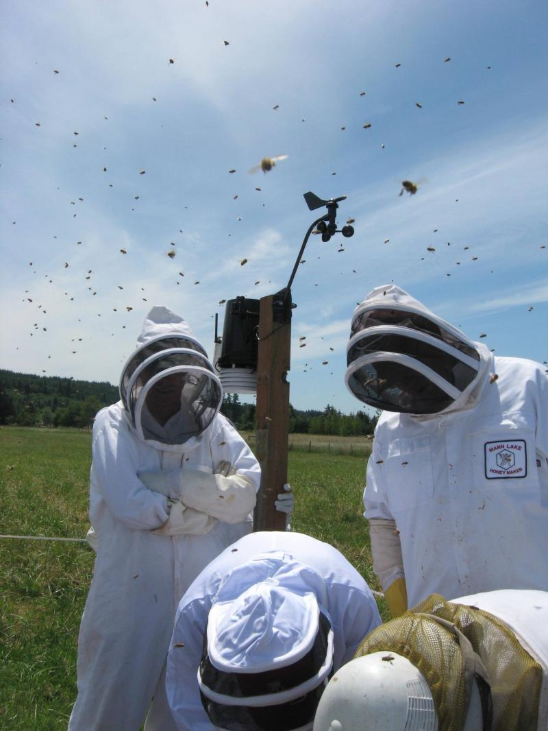 Bees on the move at June 21 hive inspection