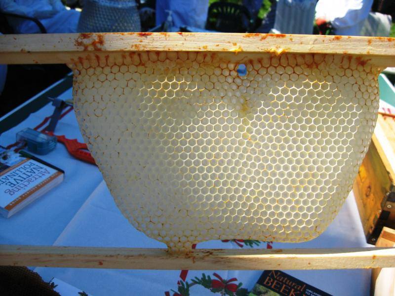Communication hole in a honey bee comb