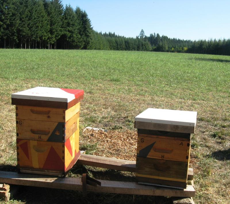 Apiary at Grouse Hills Farm, Winlock, Washington