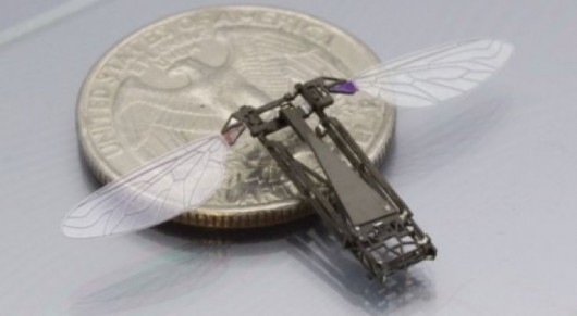 Robobee given scale by quarter - GizMag.com