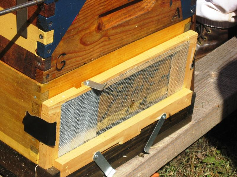 Hive guard defends colony entrance from bee predators