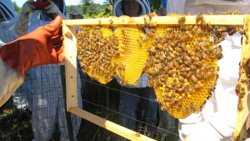 Foundationless beekeeping - example frame