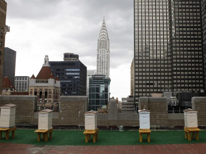 Beehives on Manhattan rooftop