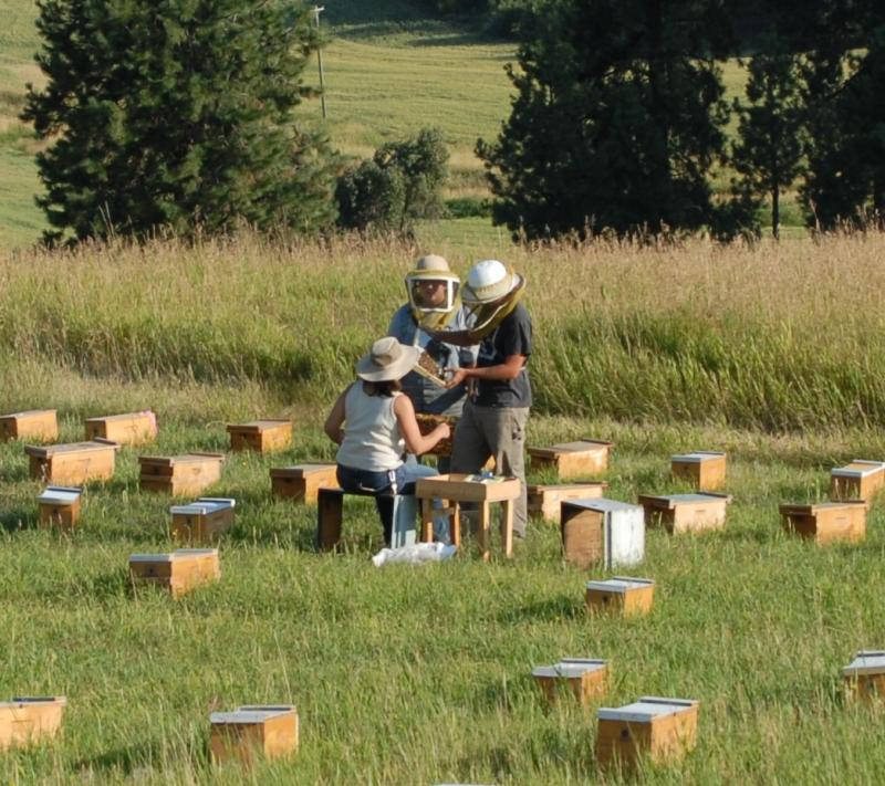 WSU Short Course in Beekeeping