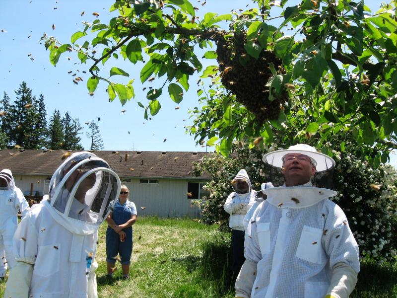Getting ready to hive a swarm at LCBA May 30 workshop